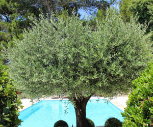 Provence Villa Rental Les Baux18